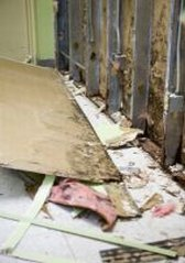 mold removal from drywalling